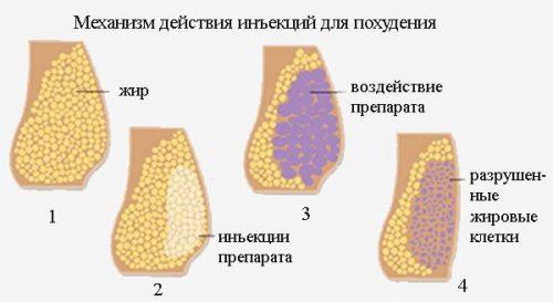 Механизм действия инъекций для похудения