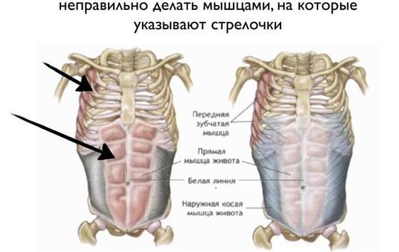 Неправильные мышцы
