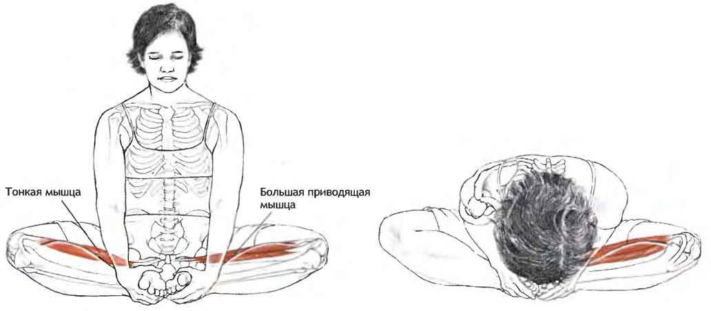 Мышцы при позе лотоса