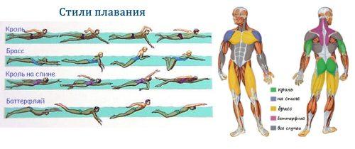 Стили плавания и мышцы в работе