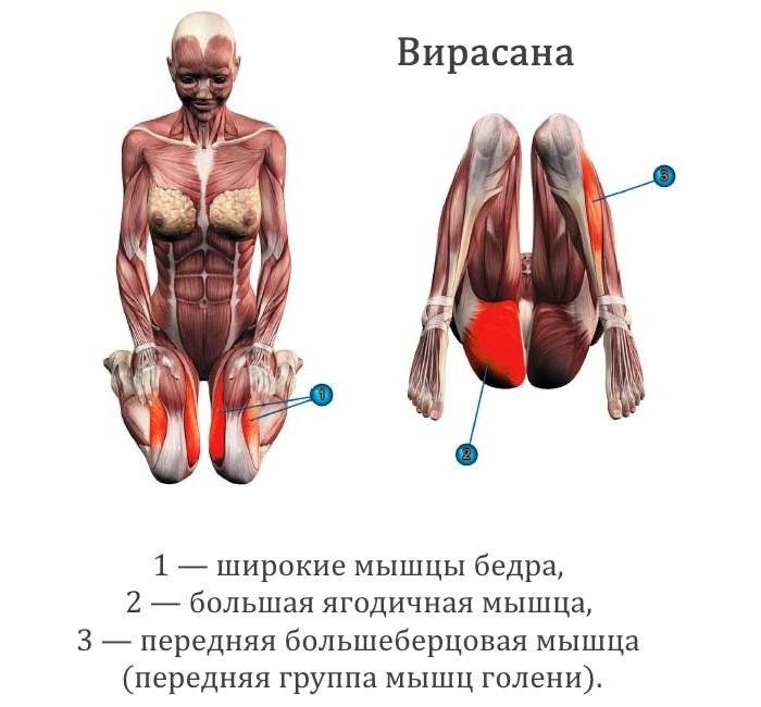 Работающие мышцы в позе вирасана