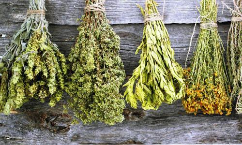 Травы против аппетита