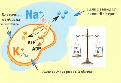 Калий и натрий