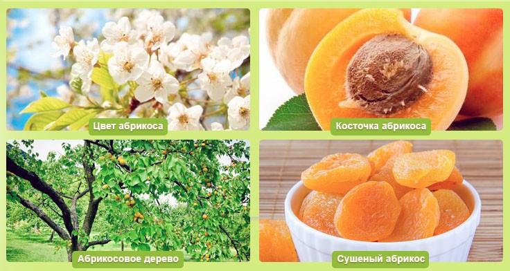 Правила соблюдения диеты на абрикосах для похудения