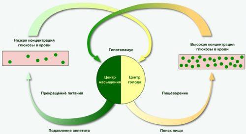 Центр насыщения и глюкоза