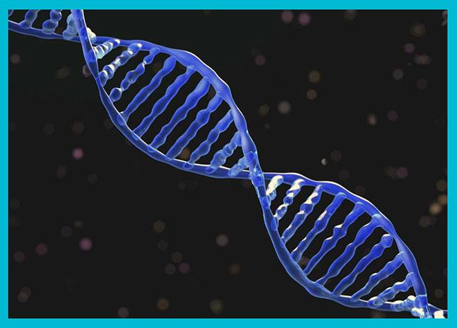 графическое изображение гена человека