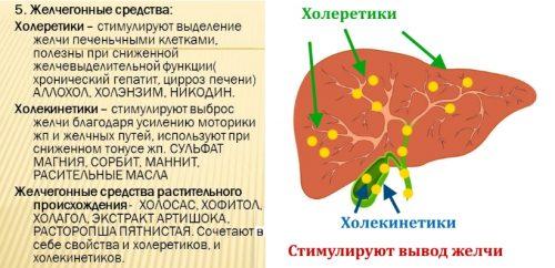 Действие холеретиков и холекинетиков