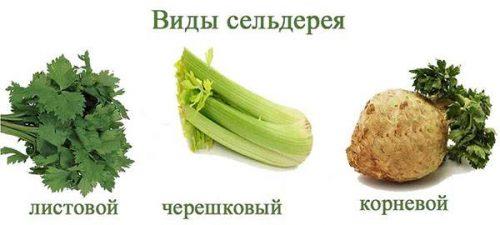 Способы употребления сельдерея для похудения