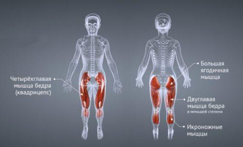 Мышцы при работе на степпере