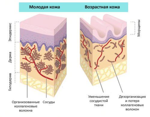 Влияние коллагена на кожу