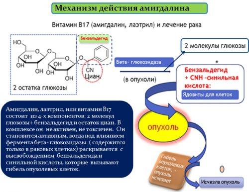 Механизм действия амигдалина