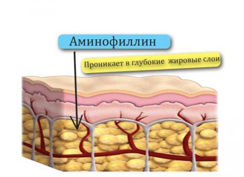 Проникновение аминофиллина в глубокие слои