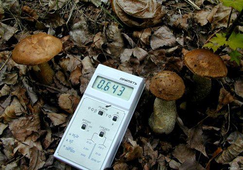 Вредная почва рядом с грибами
