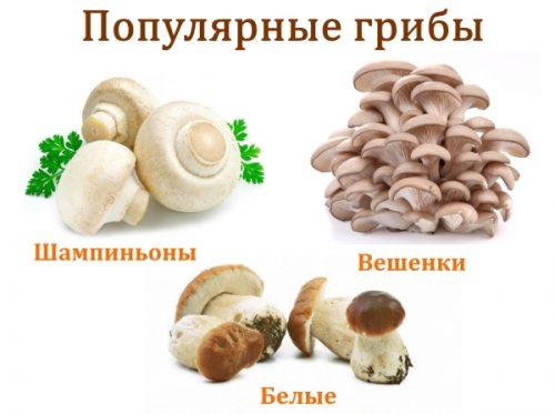 Популярные грибы для блюд
