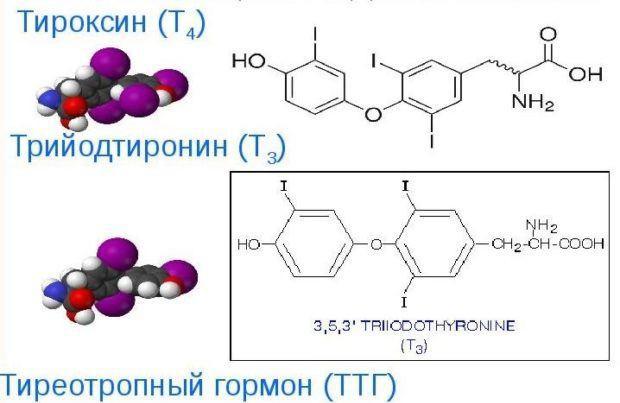 Трийодтиронин крови