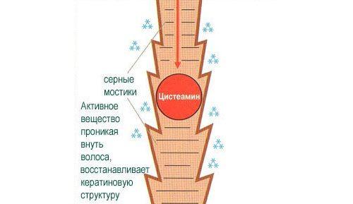 Цистеамин в структуре волоса