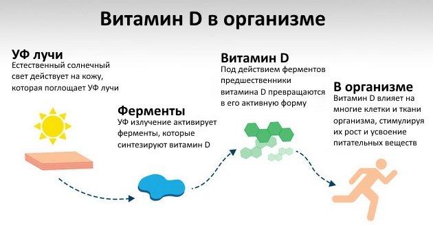 Витамин D в организме
