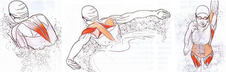 Задействованные мышцы при разных стилях