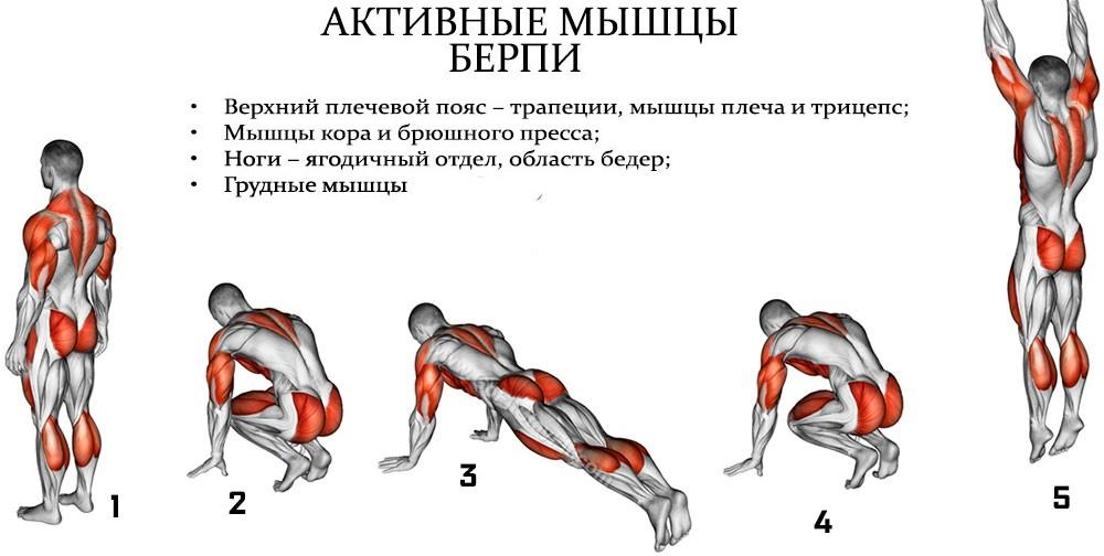 Мышцы, задействованные в берпи