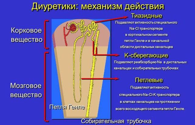 Механизм действия диуретиков