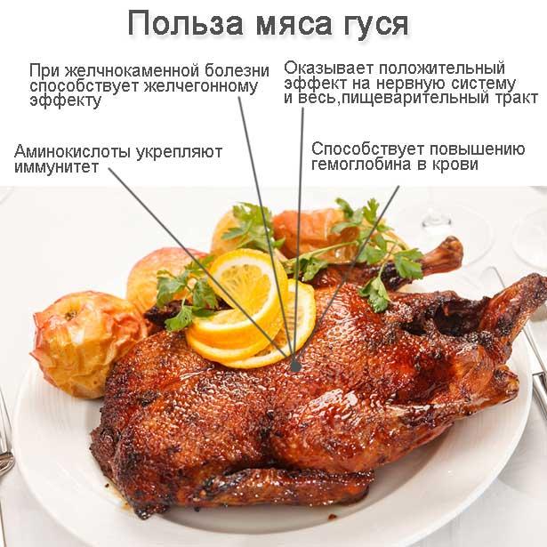 Польза мяса гуся