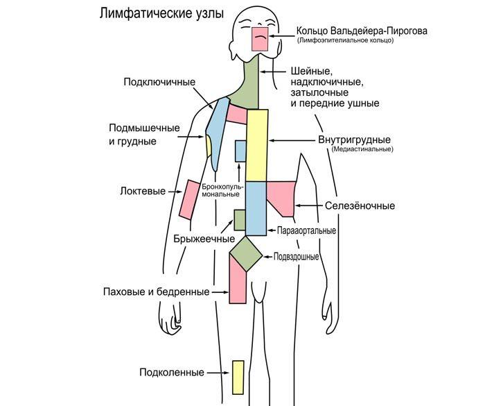 Лимфодренажные узлы