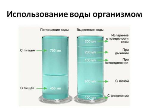 Поглощение и выделение воды