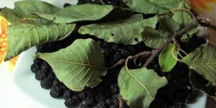 сушеные листья черемухи