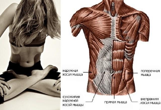Мышцы при Наули