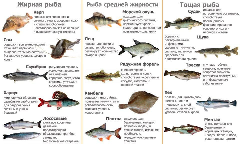 Рыбная карта