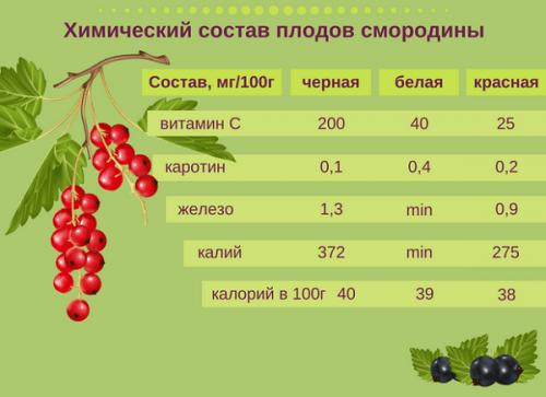 Состав плодов смородины