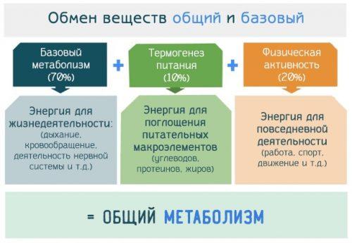 Уровни метаболизма