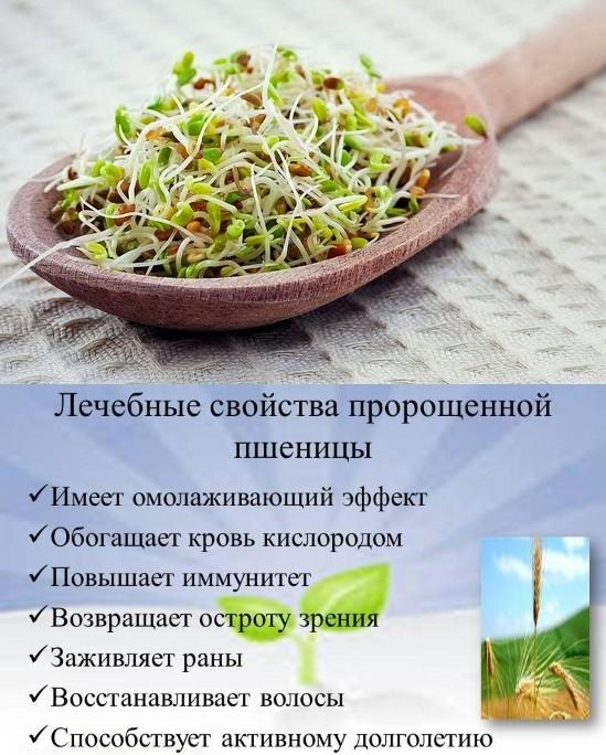 Польза пророщенной пшеницы1