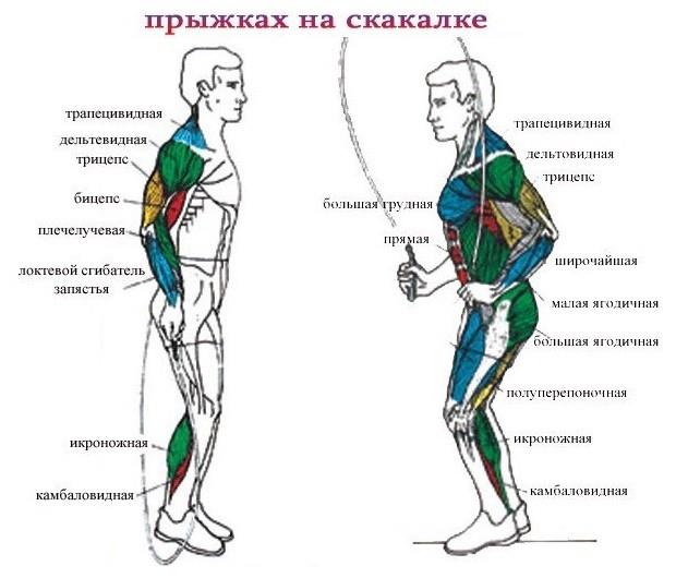 Мышцы при прыжках на скакалке
