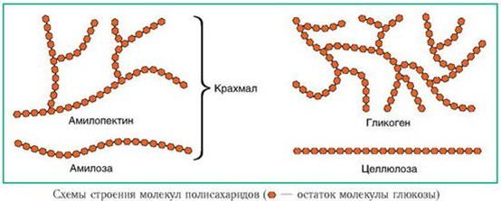Строение молекул полисахаридов