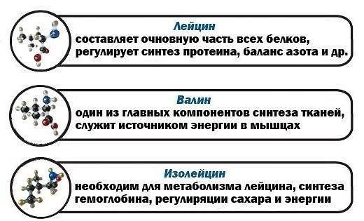 Лейцин, валин и изолейцин