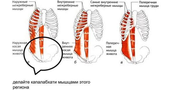 Правильные мышцы