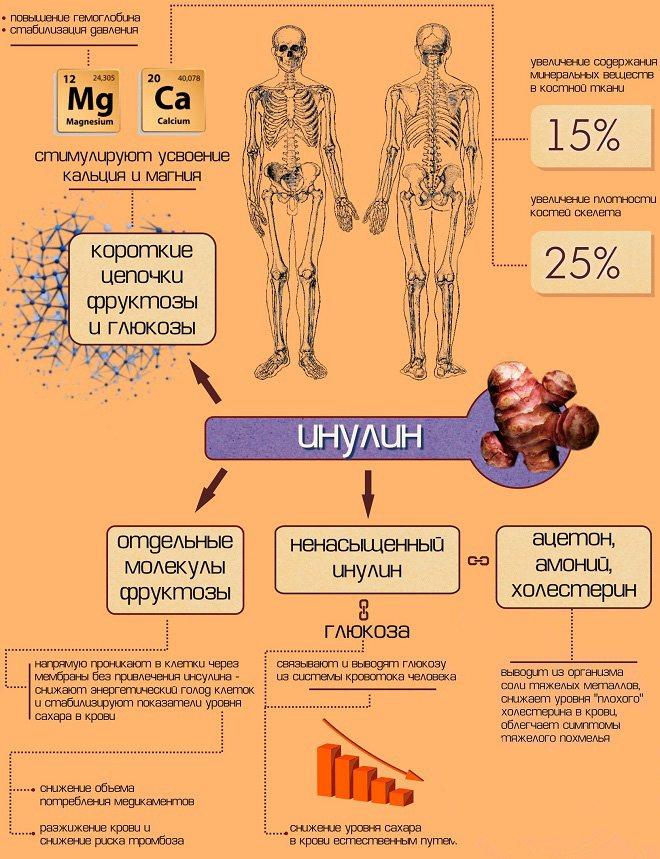 Особенности инулина