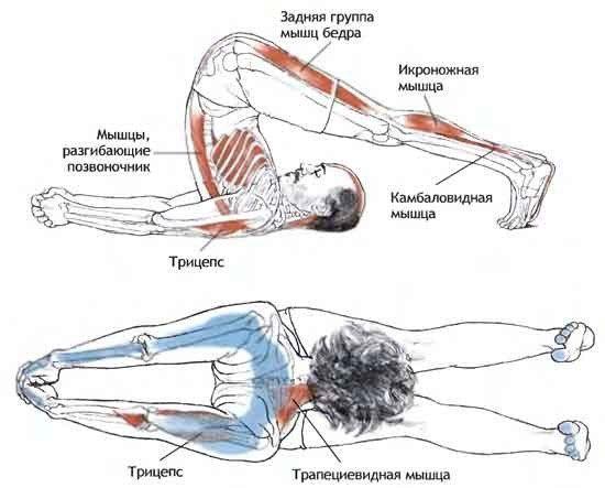 Используемые мышцы
