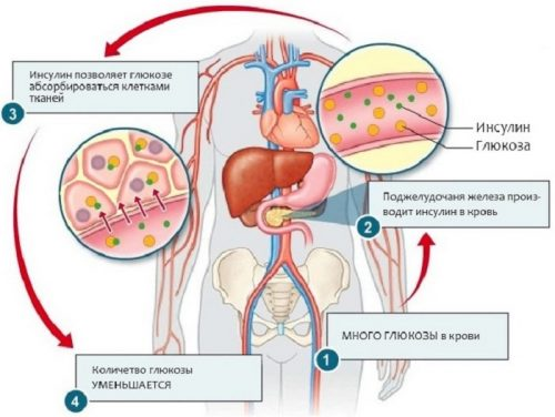 Инсулин и глюкоза