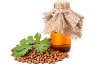 Масло семян кориандра