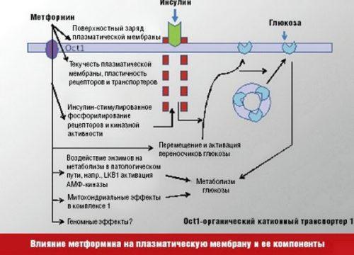 Действие Метформина на глюкозу и инсулин