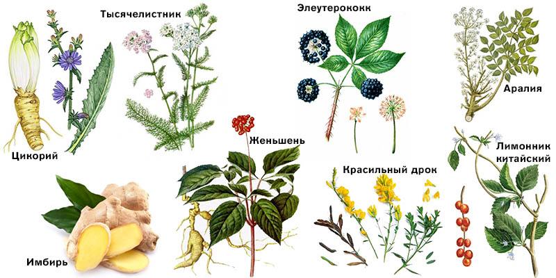 Энергетические растения