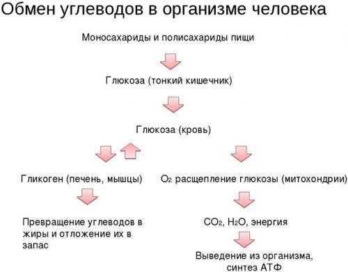 Обмен углеводов