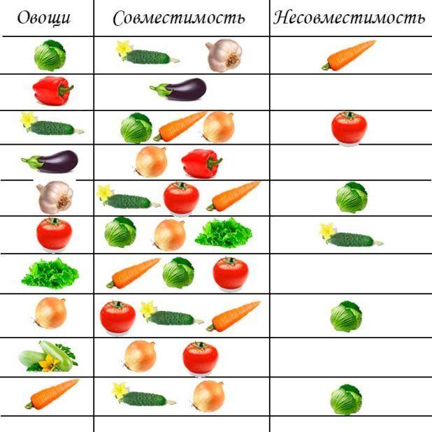 Сочетание овощей