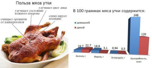 Польза мяса утки и калорийность