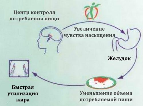 Действие Редуксина