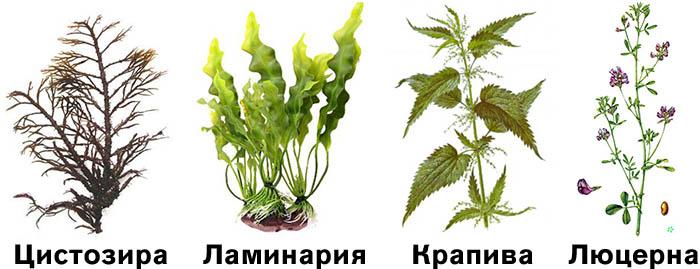 Разбухающие травы