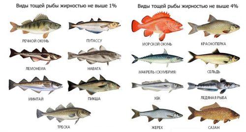 Виды рыбы с невысокой жирностью