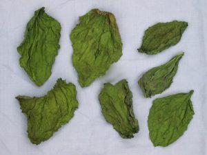 Сушёные листья подорожника